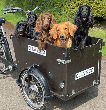 Cycling with your dogs: do's and don'ts