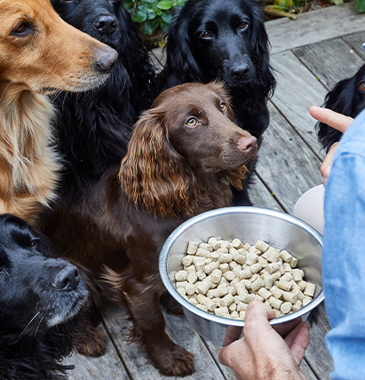 Guide to storing dog food